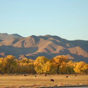 Nevada Automotive Testing Jobs
